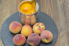 Canned peaches. Tin can with preserved peaches, fresh peaches around the can Royalty Free Stock Images