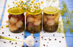 Canned pickled garlic Stock Image
