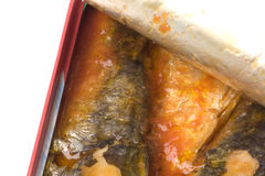 Canned Sardines Isolated Royalty Free Stock Photography
