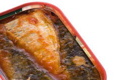 Canned Sardines Isolated Royalty Free Stock Images