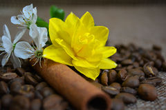 Cannella, chicchi di caffè e fiori Fotografie Stock Libere da Diritti