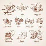 Cannelle, chocolat, citron et d'autres herbes de cuisine Illustrations tirées par la main illustration de vecteur