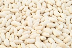 Cannellini beans. Beautiful macro background of cannellini beans in studio Royalty Free Stock Image