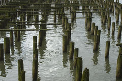 Cannery Pier Stock Photography