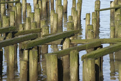 Cannery Pier Remains Royalty Free Stock Photography
