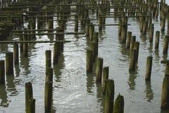 cannerypir Arkivbild