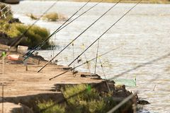 Cannes à pêche sur la berge en nature Photo stock