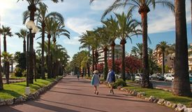 CANNES, FRANCE -  JULY 5, 2014. Palm trees on the Croisette in C Stock Photography