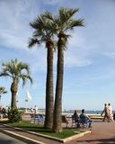 CANNES, FRANCE -  JULY 5, 2014. Palm trees on the Croisette in C Royalty Free Stock Images
