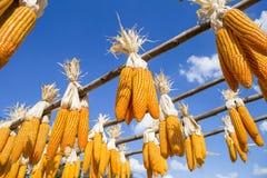Cannette de fil sèche de maïs accrochant sur le rail en bois Images libres de droits