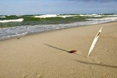 Cannette plantée dans le sable de mer côtier et son ombre photo libre de droits