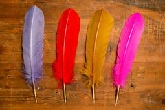Cannettes ou plumes pourpres, rouges, jaunes, et roses images stock