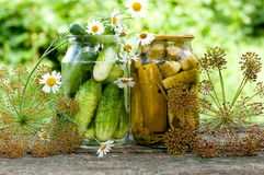 Canning cucumbers at home. And spices stock photography