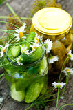 Canning cucumbers at home Royalty Free Stock Photography
