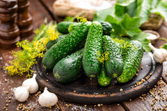 Canning cucumbers. And ingredients, salt and herbs royalty free stock images