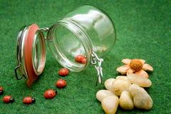 Canning jar with ladybug Stock Images