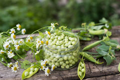 Canning peas at home Royalty Free Stock Photo