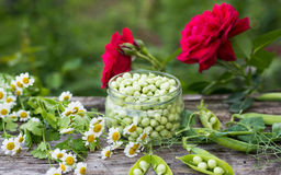 Canning peas at home Stock Image