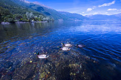 Cannobio - Lago Maggiore, Verbania, Piemont, Italy Royalty Free Stock Photography