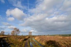 Cannock追逐在欧石南丛生的荒野的秋天风景 免版税库存图片