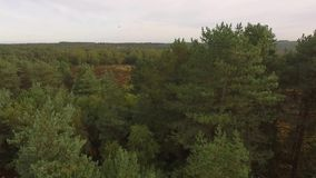 Cannock Chase Forest dron video stock footage