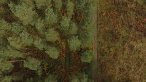 Cannock Chase Forest dron video stock video