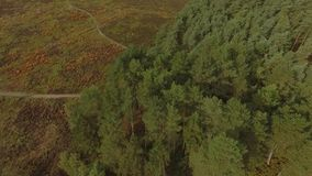 Cannock Chase Forest dron video stock video footage