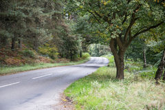 Cannock Chase Forest. Road, Staffordshire, England Royalty Free Stock Photography