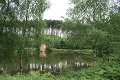 Cannock Chase. Lake with surrounding forest Royalty Free Stock Photo
