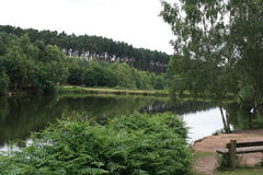 Cannock Chase. Lake with surrounding forest Royalty Free Stock Photos