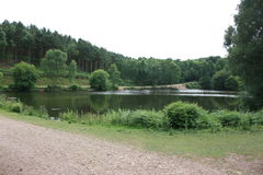 Cannock Chase. Lake with surrounding forest Royalty Free Stock Images
