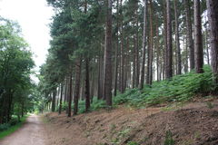 Cannock Chase. Large surrounding forest Stock Photo