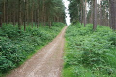 Cannock Chase. Large surrounding forest Royalty Free Stock Image