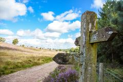 Cannock Chase Staffordshire England. Track with fingerpost (destinations weathered away) across Cannock Chase, in Stafforshire England with purple heather Royalty Free Stock Photos