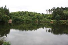 Cannock jakt Fotografering för Bildbyråer