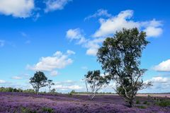 Cannock jaktområde av utstående naturlig skönhet Arkivfoton