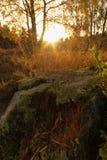 Cannock-Verfolgungs-Wald Stockbild
