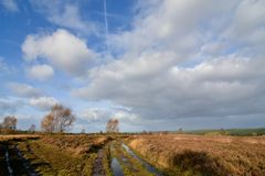 Cannockjacht Autumn Landscape over Heide royalty-vrije stock afbeeldingen
