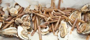 Cannolicchi con le ostriche su ghiaccio Immagine Stock Libera da Diritti