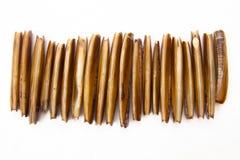 Cannolicchi crudi e freschi. Immagini Stock