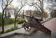 Cannon of the ancient tree Stock Images