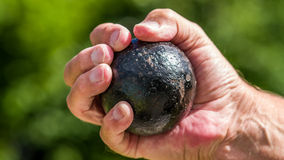 Cannon ball in hand Royalty Free Stock Photography