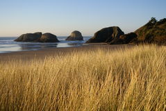 Cannon Beach Sand Dunes royalty free stock photo