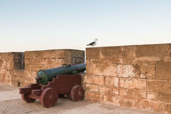 A cannon and a bird on the Skala de le Ville fort Stock Photography