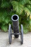 Cannon in front of ferns Royalty Free Stock Image