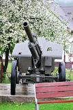 Cannon from second world war with flowering tree in Zliechov Royalty Free Stock Photos