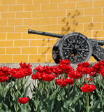 Moscow Kremlin wall with tulips. An old artillery cannon at the Kremlin, Moscow, Russia with red spring tulips in the foreground Royalty Free Stock Photography