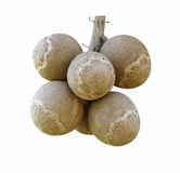 Cannonball fruits Royalty Free Stock Photography