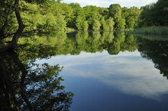 Cannop Ponds Royalty Free Stock Photography