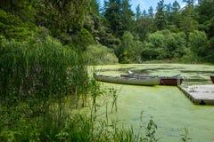 Canoës accouplés dans un étang dense photo stock
